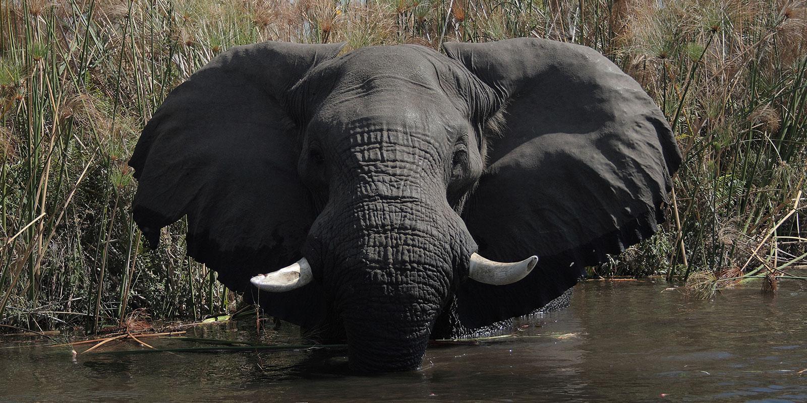 elephant-slider
