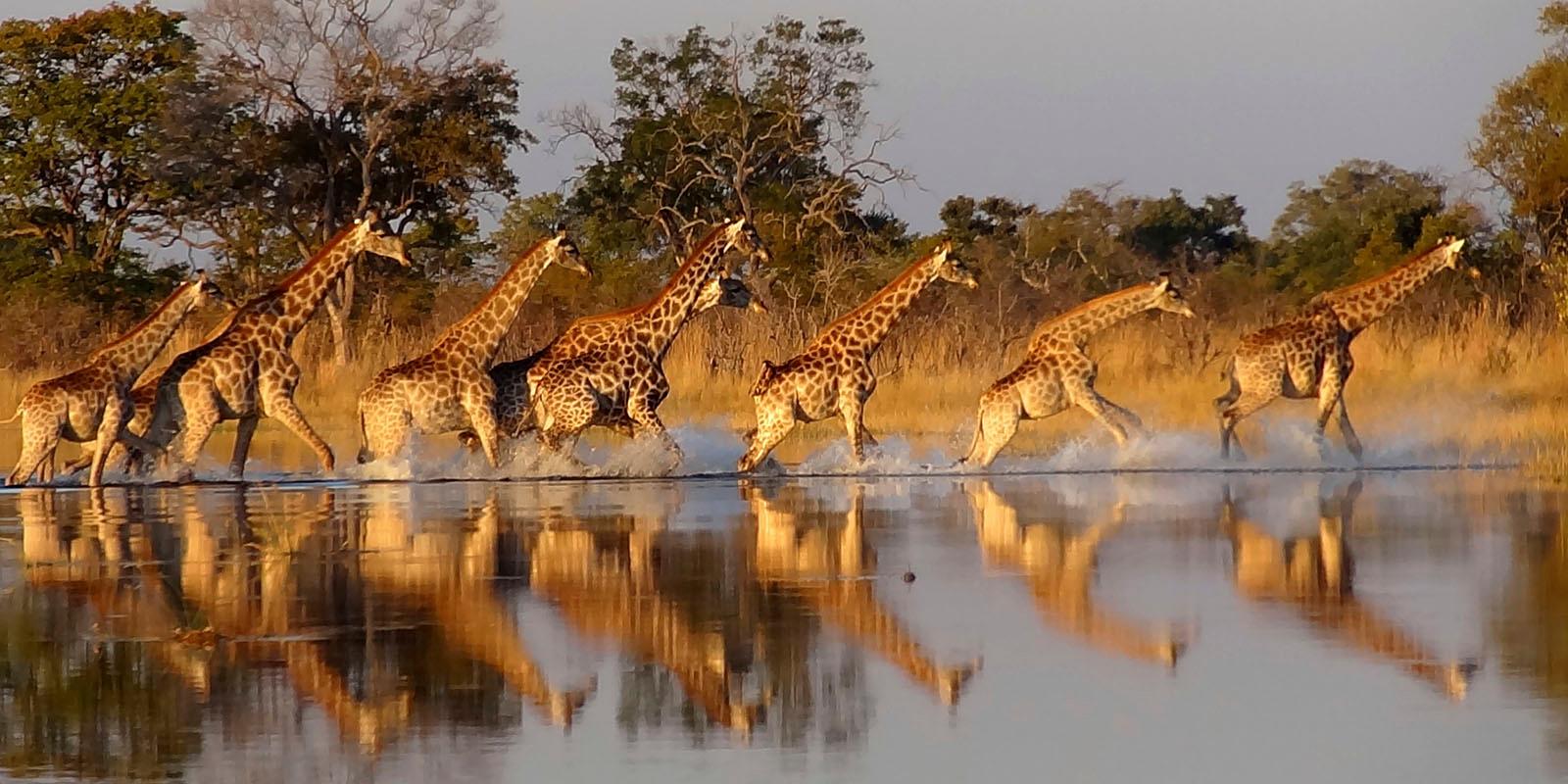 giraffe-1600-slider
